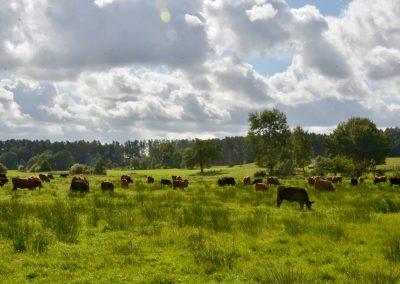 Bioranch_Landwirtschaft_Ökolandbau062