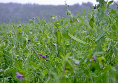 Bioranch_Landwirtschaft_Oekolandbau064